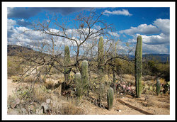 Tree_and_cactus_4